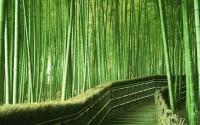 Pohon-kaktus-dan-Bambu